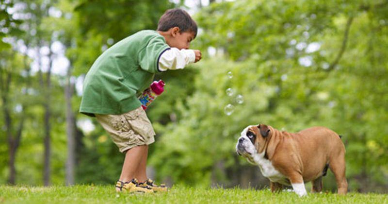 7. Melarang anak bermain luar rumah berinteraksi hewan
