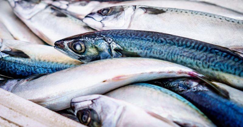 7. Makanan laut bermekuri