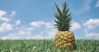 5. Mengonsumsi durian, nanas air Kelapa dapat menggugurkan kandungan