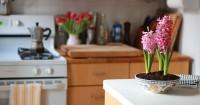 5. Letakkan tanaman dalam rumah