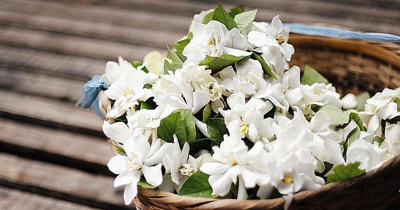 2. Bunga melati