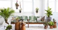 10 Tanaman Hias Interior Rumah Agar Tidak Membosankan