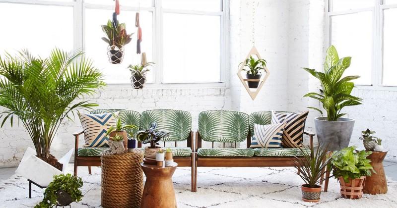 10 Tanaman Indoor Untuk Hias Interior Rumah Popmama Com