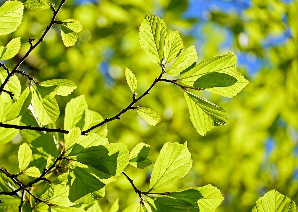 6. Gunakan wewangian dari tumbuhan
