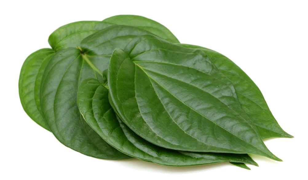 Jamu ramuan daun sirih