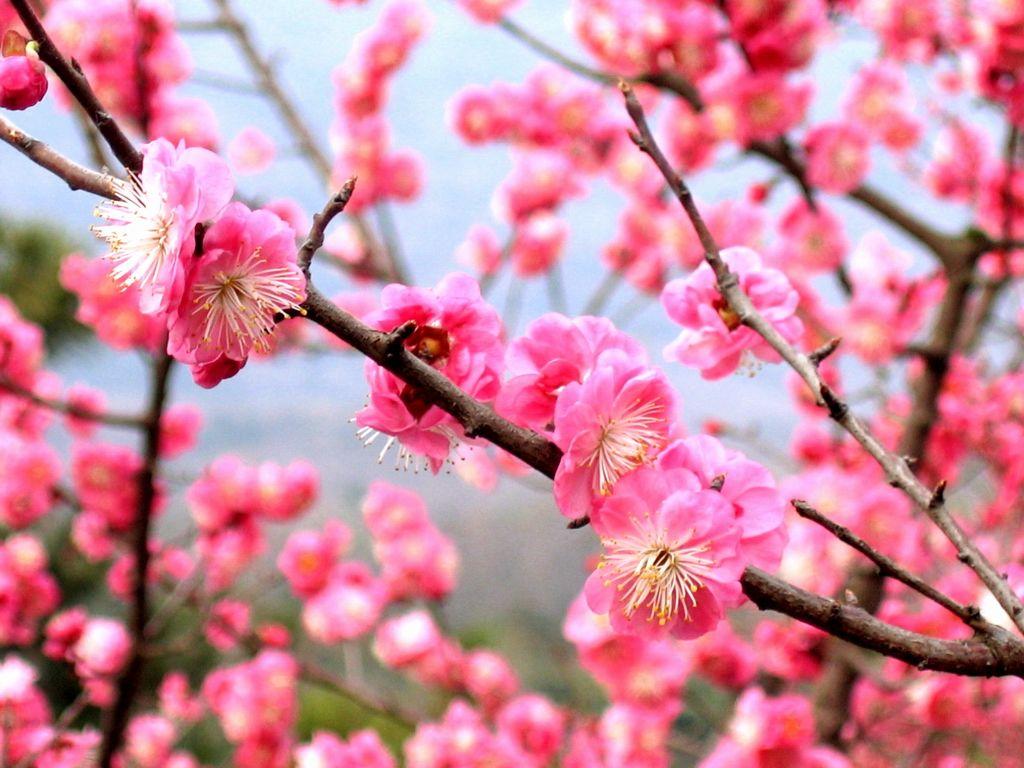 2. Tahun Baru Imlek menandai Festival Musim Semi