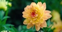 7 Jenis Bunga Cocok Ditanam Taman Rumah