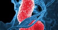 5 Cara Mendapatkan Bakteri Baik Saluran Cerna Bayi