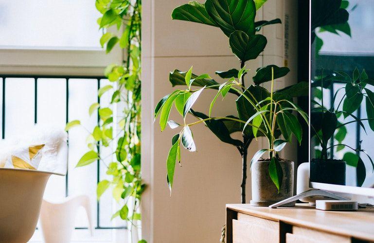 3. Bawa suasana ruangan outdoor ke dalam ruangan