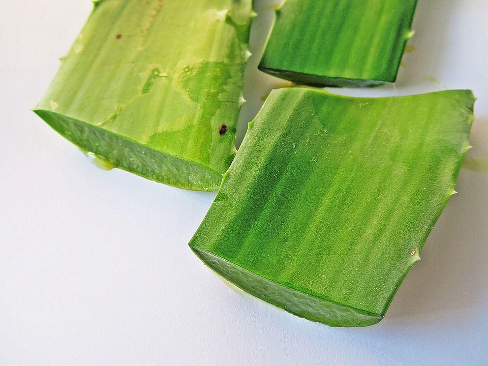 1. Aloe vera (lidah buaya)