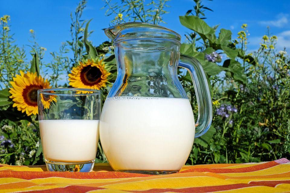 6. Susu tinggi lemak