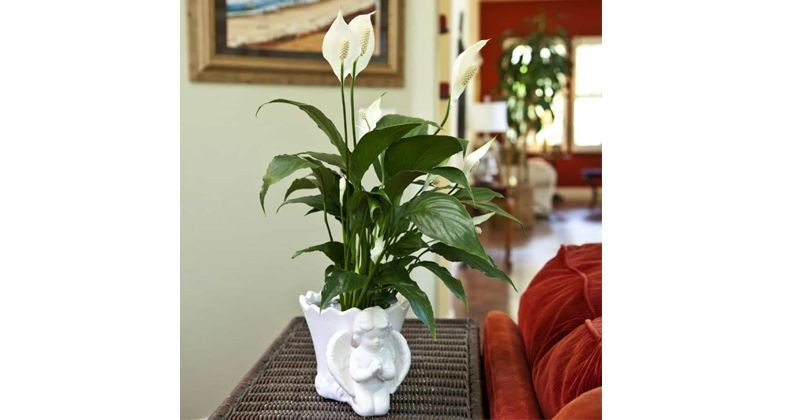 1. Peace lily
