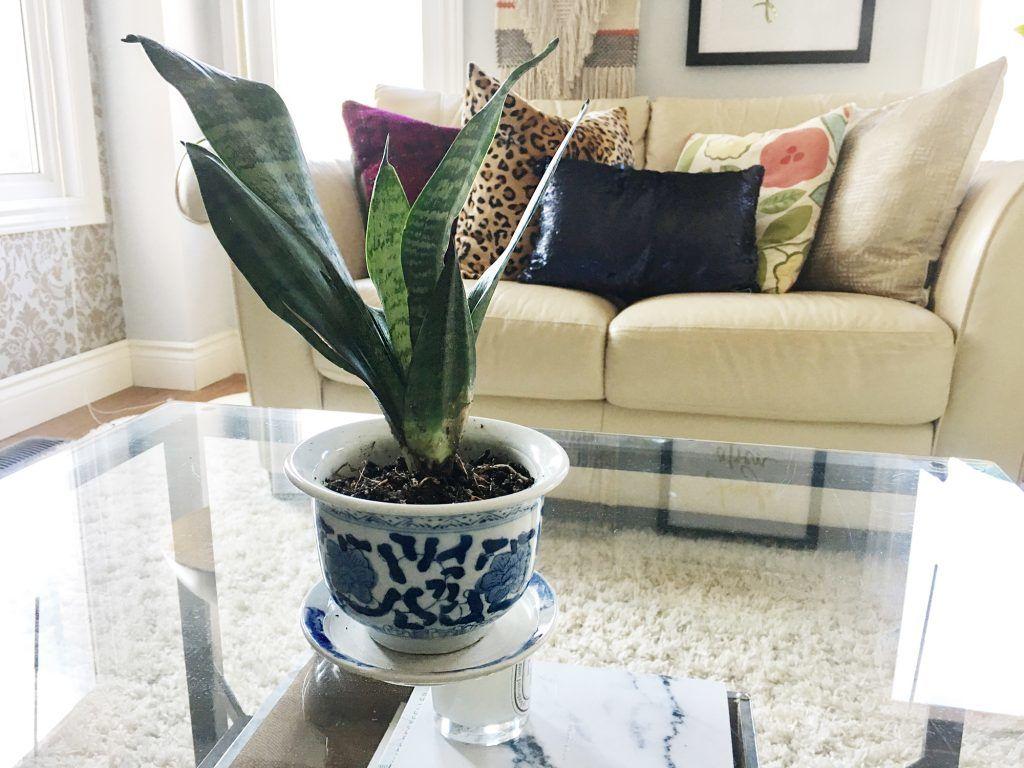 5. Snake plant