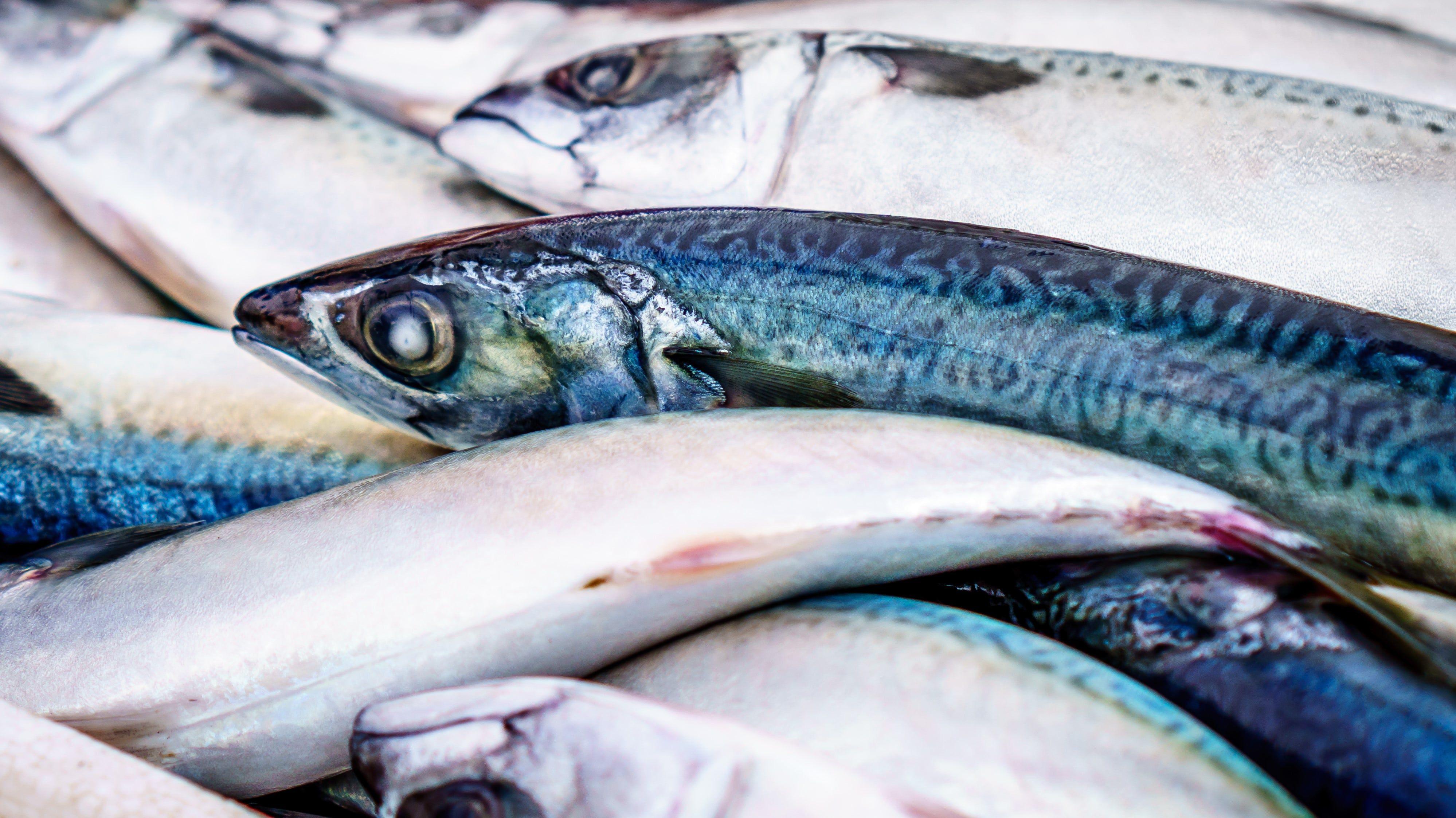 7. Ikan laut menjadi makanan pelepas lelah setelah melakukan perjalanan