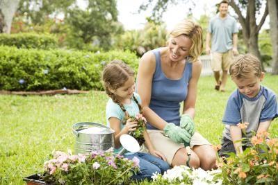 3. Cara perawatan tanaman bawang putih