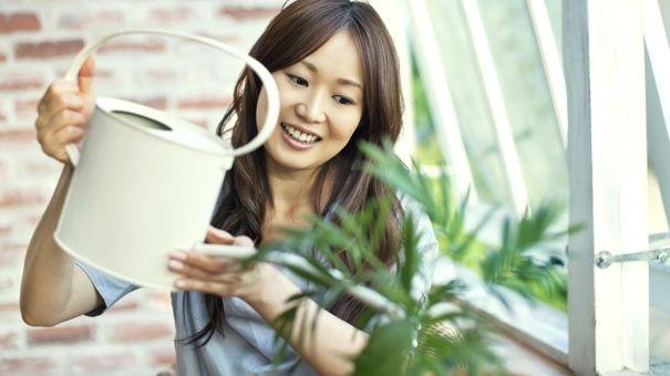 4. Kelebihan kekurangan berkebun dalam ruangan