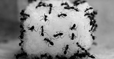 7 Cara Mudah Membasmi Semut Rumah