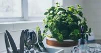 Ingin Sirkulasi Dapur Lancar Terapkan Semi-Outdoor Kitchen