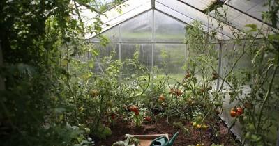 7 Jenis Sayuran Bisa Kamu Tanam Rumah