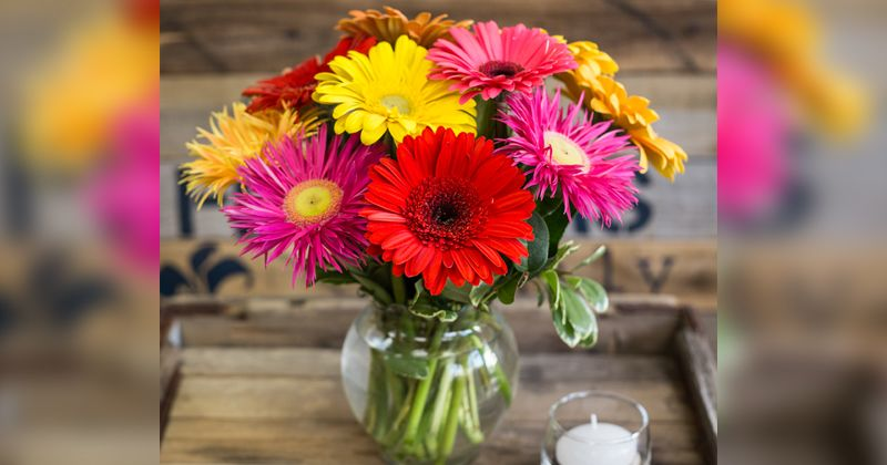 6. Garbera daisy