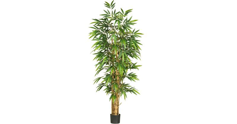 3. Bamboo palm