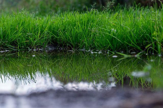 3. Bersihkanlah taman rumah dari genangan air
