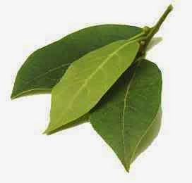 2. Aroma daun salam dianggap ampuh usir kecoa