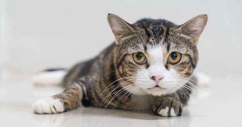 4. Kucing