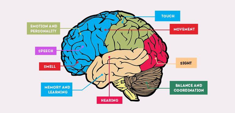 2. Apa penyebab terjadi Alzheimer anak kecil