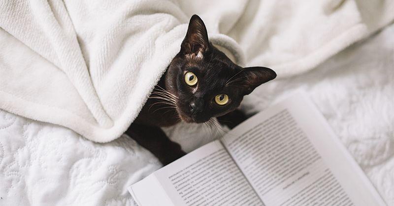 6. Ailurophobia atau ketakutan terhadap kucing