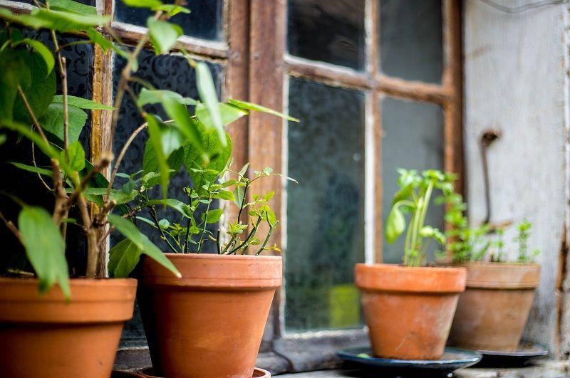 7. Melindungi tanaman