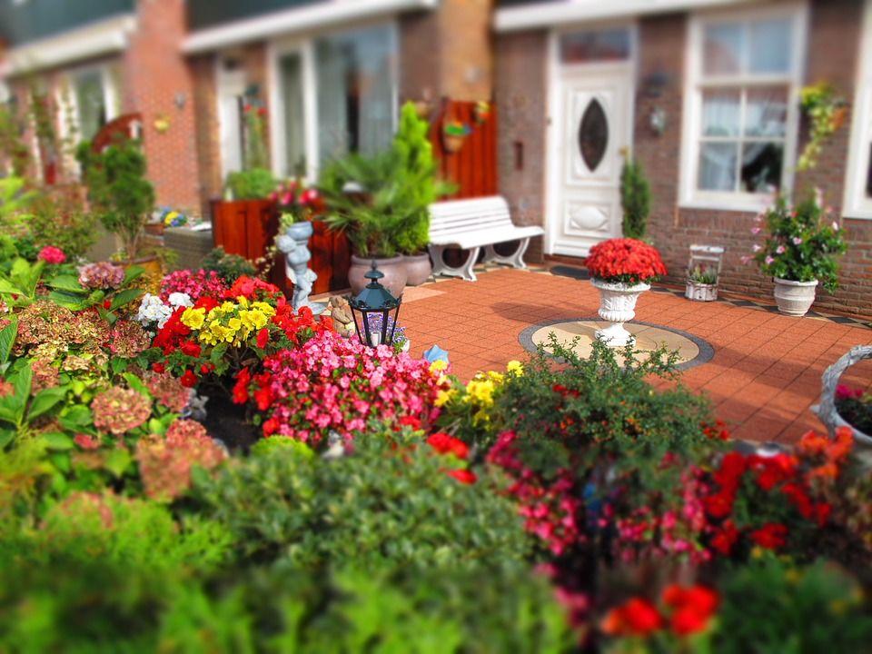 Menyambut Musim Panas 7 Bunga Ini Cocok Ditanam Di Taman Rumah Popmama Com