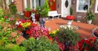 Menyambut Musim Panas, 7 Bunga Ini Cocok Ditanam Taman Rumah
