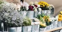 Bunga Berdasarkan Bulan Kelahiran Bisa Gambarkan Karakter Kamu