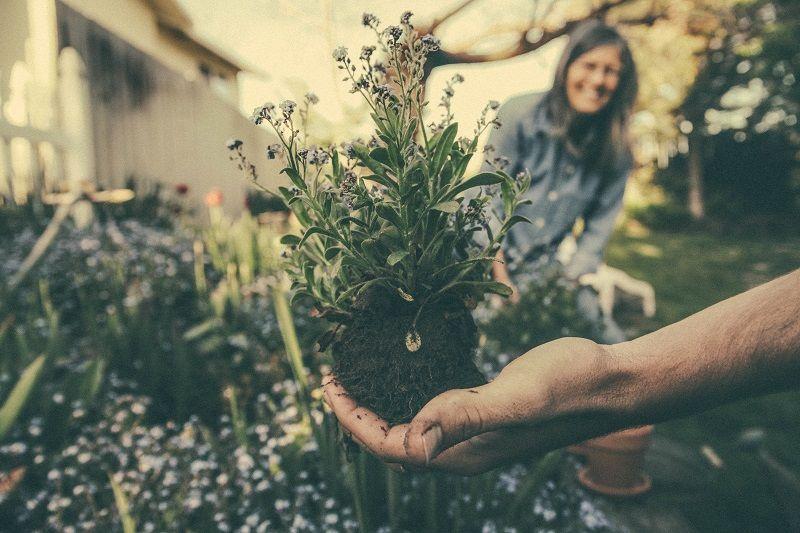 5. Mengurangi pemicu alergi area taman