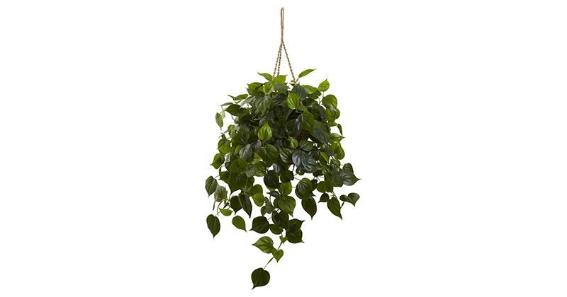 4. Philodendron
