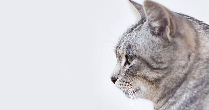 4. Biarkan kucing kamu mengenali ruangan baru