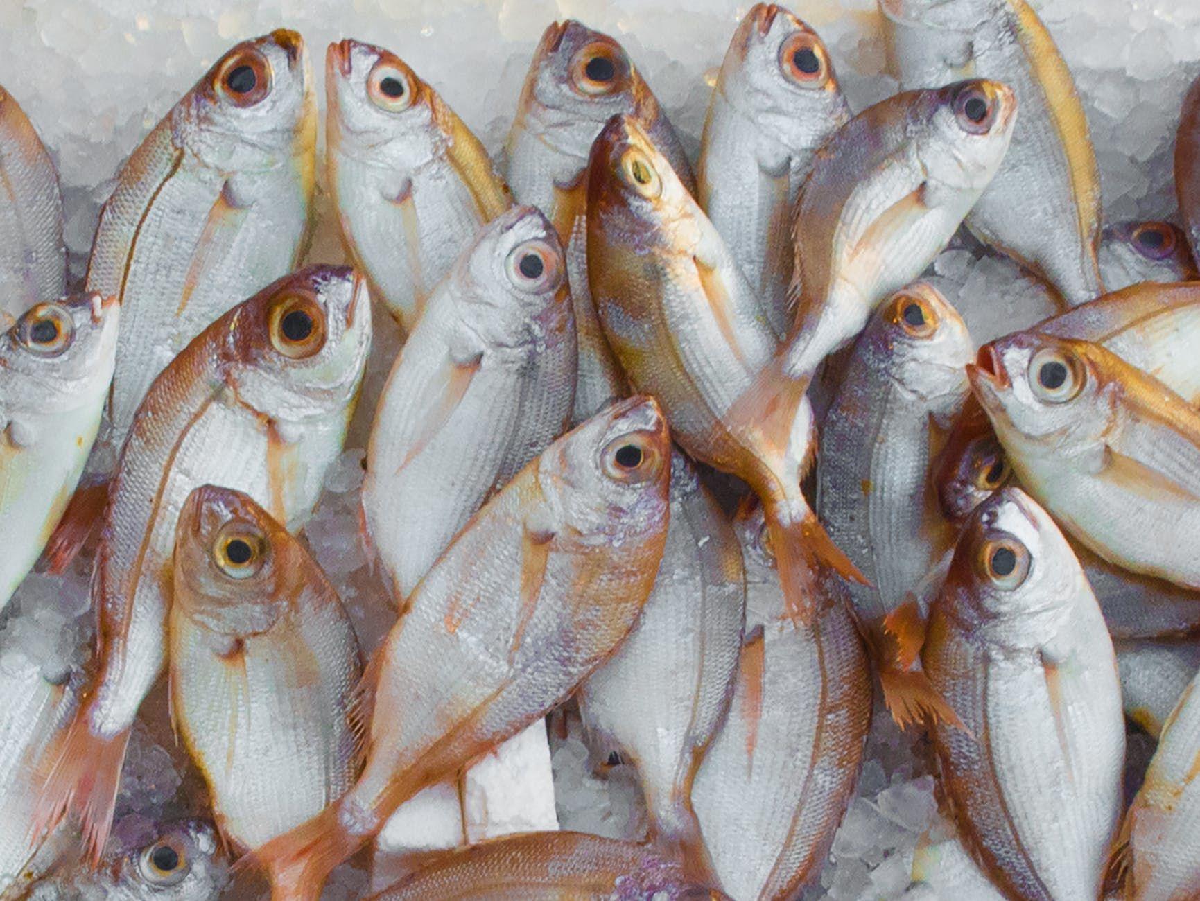 7. Konsumsi Ikan Secara Wajar