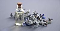 5. Indra penciuman lebih sensitif