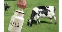 7. Sebagai pengganti susu sapi tepat