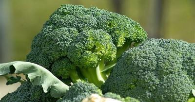Lezat Penuh Gizi, Ini dia 7 Manfaat Brokoli Anak