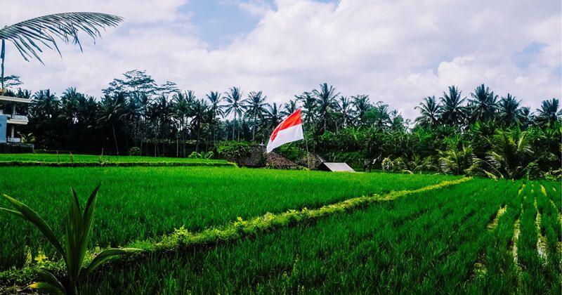 4. Sebagai irigasi pertanian