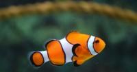 1. Ikan