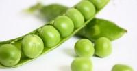 6. Kacang polong