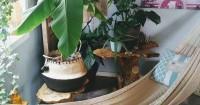 5. Plant and hammock