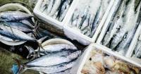 5. Jenis ikan bermerkuri