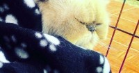 Tips Membersihkan Kandang Kucing agar Terhindar dari Toksoplasma