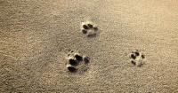 1. Perhatikan kebersihan ganti pasirnya