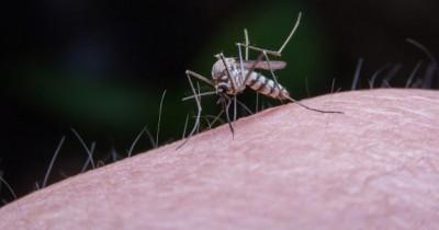 Musim DBD, Ini 6 Cara Mengusir Nyamuk dari Rumah