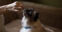 2. Bagaimana infeksi karena kucing terjadi ibu hamil